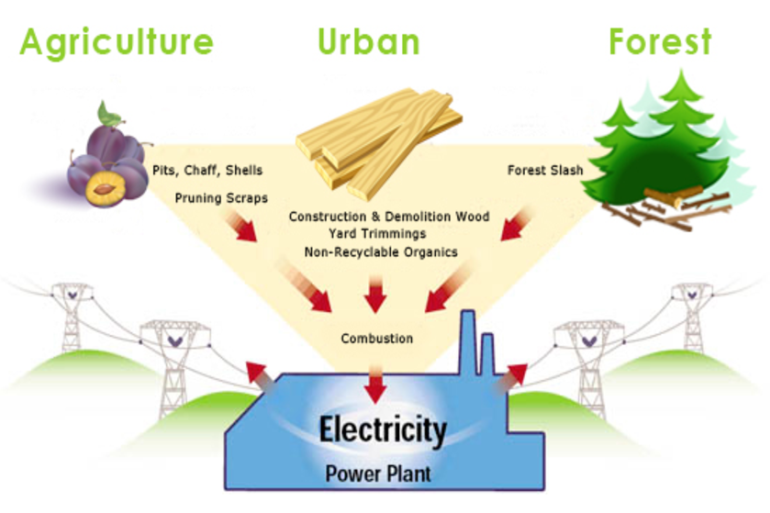 Reasons Why Biomass Energy Should Be a Top Choice