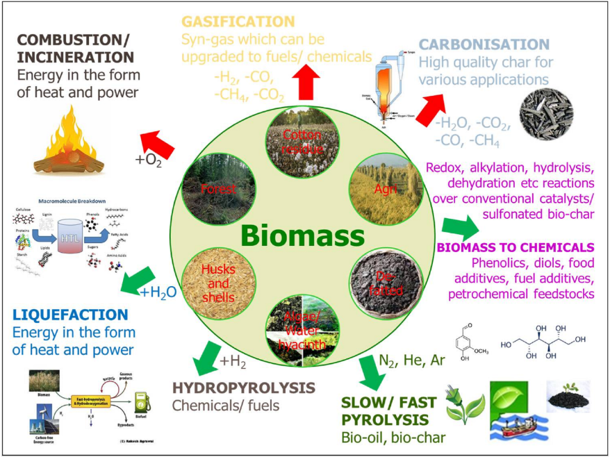 Biomass Powering - Reurasia