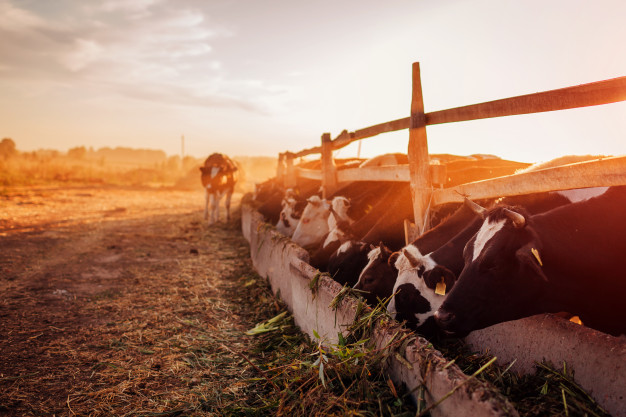 A New Step For Dairy Farmers Conserve Energy